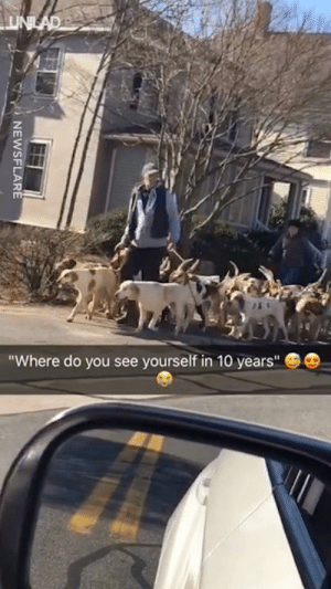"Dank, Dogs, and Life: Where do you see yourself in 10 years"" Now THIS is the amount of dogs I need in my life 😂😂"