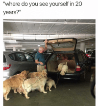"Dogs, Memes, and Pizza: ""where do you see yourself in 20  years?"" Me, 3 puppies, 4 old dogs, and a pizza delivery boy who knows my order by heart."