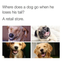 Doe, Dogs, and Time: Where does a dog go when he  loses his tail?  A retail store. One time Jasweenie told me that my dog's tail would grow back -Alondra