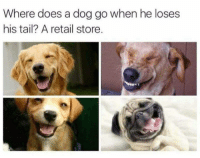 Instagram, Puns, and Twitter: Where does a dog go when he loses  his tail? A retail store. Instagram: @punsonly Twitter: @puns_only