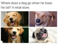 Memes, Retail, and 🤖: Where does a dog go when he loses  his tail? A retail store.