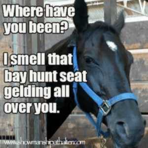 horse showing meme - Google Search: Where fhave  you been?  Ismell that  bay hunt seat  gelding all  Over you.  ww.showmanshipathalencom horse showing meme - Google Search