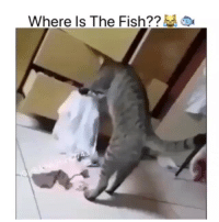 Memes, Fish, and 🤖: Where Is The Fish?? GIVE HIM HIS TUNA ,COME ON 😂😂😂