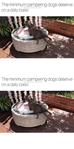 Where is this doggie spa and can I check myself in?Source: @the_blueboysvia @dogsbeingbasic: Where is this doggie spa and can I check myself in?Source: @the_blueboysvia @dogsbeingbasic
