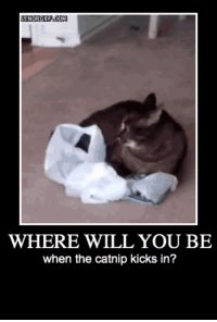 Catnip, Will, and You: WHERE WILL YOU BE  when the catnip kicks in? <p>It Always Hits When You Least Expect It</p>