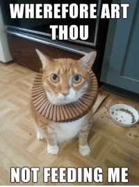 LOLcats and Arts: WHEREFORE ART  THOU  NOT FEEDING ME  on nngur Shakespurr is confused