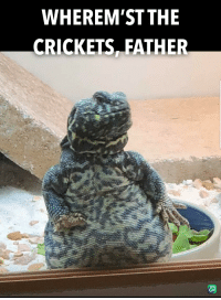 crickets: WHEREM'ST THE  CRICKETS FATHER
