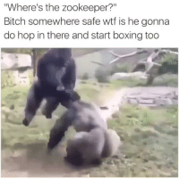 """Bitch, Boxing, and Memes: """"Where's the zookeeper?""""  Bitch somewhere safe wtf is he gonna  do hop in there and start boxing too Noooo 😂😂😂😂😂😂😂"""