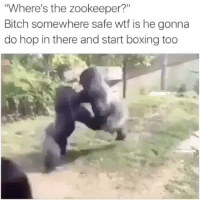 """Bitch, Boxing, and Memes: Where's the zookeeper?""""  Bitch somewhere safe wtf is he gonna  do hop in there and start boxing too My last gorilla post was taken down 💀💀💀"""