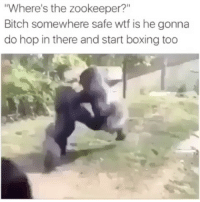 """Bitch, Boxing, and Memes: Where's the zookeeper?""""  Bitch somewhere safe wtf is he gonna  do hop in there and start boxing too Follow my other account @antisocialtv @antisocialtv @antisocialtv"""