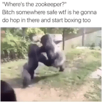 """Bitch, Boxing, and Funny: Where's the zookeeper?""""  Bitch somewhere safe wtf is he gonna  do hop in there and start boxing too Bih 😂😂😂"""
