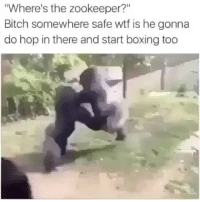 """Bitch, Boxing, and Funny: Where's the zookeeper?""""  Bitch somewhere safe wtf is he gonna  do hop in there and start boxing too funniest15 viralcypher funniest15seconds Www.viralcypher.com"""