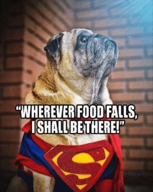 "Animals, Dogs, and Food: ""WHEREVER FOOD FALLS,  ISHALL BETHERE! Dog Memes Of The Day 32 Pics – Ep43 #dogs #dogmemes #lovelyanimalsworld - Lovely Animals World"