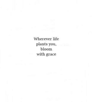 Life, Grace, and You: Wherever life  plants you,  bloom  with grace