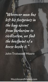 "Horse, Civilization, and Com: ""Wherever man has  left hit footprints in  the long ascent  from barbarism to  civilization, we find  the hoofprint of a  horse begide it.""  John Trotwood Moore  MuzzlesandManes.com ""Wherever man has left his footprints in the long ascent from barbarism to civilization, we find the hoof print of a horse beside it."" - John Trotwood Moore"