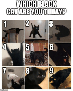 Black, Time, and Today: WHICH BLACK  CAT ARE YOU TODAY?  2  3  1  4  8  7  mgilip.com All Black All The Time