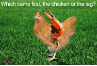 """<p>[<a href=""""https://www.reddit.com/r/surrealmemes/comments/7yl37d/top_ten_facts_about_the_ostrich/"""">Src</a>]</p>: Which came first, the chicken or the leg? <p>[<a href=""""https://www.reddit.com/r/surrealmemes/comments/7yl37d/top_ten_facts_about_the_ostrich/"""">Src</a>]</p>"""