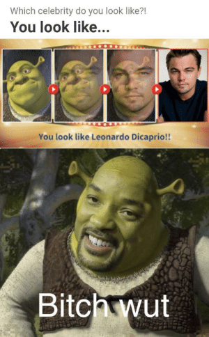 These are confusing times: Which celebrity do you look like?!  You look like...  You look like Leonardo Dicaprio!  Bitch wut These are confusing times