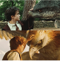 Harry Potter, Memes, and 🤖: Which did you like better: Harry Potter or fantastic Beasts?