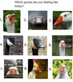 England, Memes, and Target: Which goose are you feeling like  today?  2.  3  4  5.  6  7  8  9. not-aph-england:  kingof-memes:Feelin' a bit 8 today, frens …  @mayumisatosan