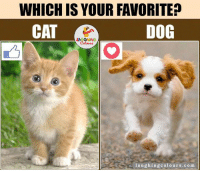 Indianpeoplefacebook, Dog, and Cat: WHICH IS YOUR FAVORITE?  CAT  DOG  laughing colours.com 'Cat' Or 'Dog'... ?? ;)