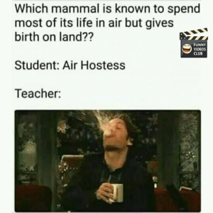Really funny grandma.: Which mammal is known to spend  most of its life in air but gives  birth on land??  FUNNY  VIDEOS  CLUB  Student: Air Hostess  Teacher  s8 Really funny grandma.