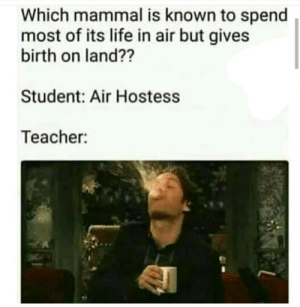Teacher shocks student Rocks 😎: Which mammal is known to spend  most of its life in air but gives  birth on land??  Student: Air Hostess  Teacher: Teacher shocks student Rocks 😎
