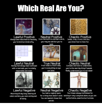 [Src]: Which Real Are You?  Lawful Positive  Neutral PositiveChaotic Positive  Always been described as heavenly, From the north to northern north, Sweet, crisp, crunch, and dun;  you're kind but kinda lofty.  you may be cold but you're  you know how to have fun.  bold  1 cma  h 3 cm  g 5 cm  Lawful Neutral  Having had always been confused  with a mermaid, you're orderly,  responsible and staid.  True Neutral  From trees to more trees,  you're everything an eye  can seize.  Chaotic Neutral  Complex and hard to understand,  you're the next big thing if people  finally understand you're not dada!  Lawful Negative  Neutral NegativeChaotic Negative  You hold a mighty reach,  You'd been always humiliated for  Mourning all day long, wearing all  colors sombre, you were acting sad  all along  for a thing that doesn't exist. existing in only a physical plane, as you are  authoritative, assertive but humane  You can bewitch those that  persist. [Src]