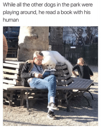 😂😀😀 | More 👉 @miinute: While all the other dogs in the park were  playing around, he read a book with his  human 😂😀😀 | More 👉 @miinute