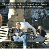 What a good boy (@hilarious.ted): While all the other dogs in the park were playing  around, he read a book with his human.  Itiban What a good boy (@hilarious.ted)