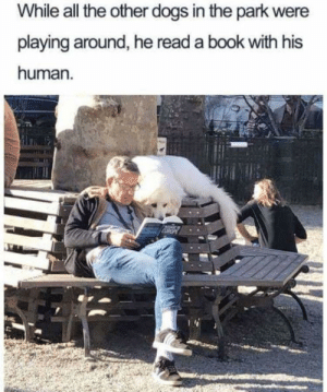 Dogs, Best, and Book: While all the other dogs in the park were  playing around, he read a book with his  human. wholesome mans best fren