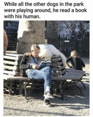 https://t.co/yUDyFHvVvV: While all the other dogs in the park  were playing around, he read a book  with his human.  GUP  atiban https://t.co/yUDyFHvVvV