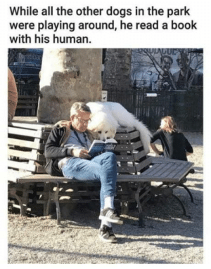 omg-humor:  Not like the other doggos: While all the other dogs in the park  were playing around, he read a book  with his human omg-humor:  Not like the other doggos