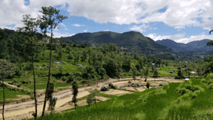 While hiking with some friends in south Asia, we came across some rice fields and were welcomed to join in the work.: While hiking with some friends in south Asia, we came across some rice fields and were welcomed to join in the work.