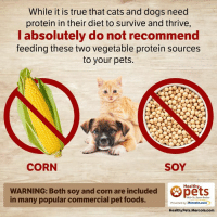 Dieting, Dogs, and Food: While it is true that cats and dogs need  protein in their diet to survive and thrive,  I absolutely do not recommend  feeding these two vegetable protein sources  to your pets.  CORN  SOY  Healthy  WARNING: Both soy and corn are included  in many popular commercial pet foods.  Presented by With Dr. Karen Becker  Mercola.com  Healthy Pets Mercola.com