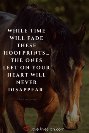 Beautiful, Click, and Love: WHILE TIME  WILL FADE  THESE  HOOFPRINTS...  THE ONES  LEFT ON YOUR  HEART WILL  NEVER  DISAPPEAR.  OLoveliveson.com  love lives on.com Loss of a Pet Quotes | A beautiful quote about losing a horse. Click to read 50+ beautiful quotes for when you're grieving the Loss of a Pet. Loss of a Pet | Losing a Pet | Pet Loss | Loss ofa Pet | Death of a Pet | Grieving a Pet | Pet Grief | Grieving the Loss of a Pet | Saying Goodbye to a Pet | How to Deal With the Loss of a Pet | Pet Bereavement | Dealing With the Loss of a Pet | How to Get Over the Loss of a Pet | Pet Loss Grief | Coping With Pet Loss. #LossofaPet #PetLoss #LosingaPet