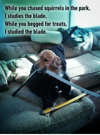 A master of Bork-Fu. 9gag.com/tag/doggo?ref=fbpic: While you chased squirrels in the park,  I studies the blade.  While you begged for treats  l studied the blade. A master of Bork-Fu. 9gag.com/tag/doggo?ref=fbpic