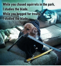 9gag, Blade, and Memes: While you chased squirrels in the park,  I studies the blade.  While you begged for treats  l studied the blade. A master of Bork-Fu. 🤺 Follow @9gag - - - 9gag doggo samurai