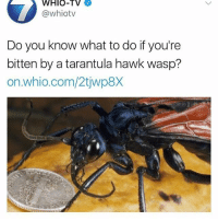 Memes, School, and Summer: WHIO-TV  @whiotv  Do you know what to do if you're  bitten by a tarantula hawk wasp'?  on.whio.com/2tjwp8,X Some science for you, since we are out of school and nobody uses their brain at any point in the summer. Or at least, you shouldn't. I don't know what you dorks are doing.