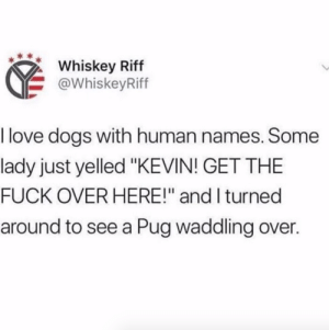 "Cats, Dogs, and Love: Whiskey Riff  @WhiskeyRiff  I love dogs with human names. Some  lady just yelled ""KEVIN! GET THE  FUCK OVER HERE!"" and I turned  around to see a Pug waddling over. Fun fact. My neighbour had a dog named Jason and every-time she screamed ""Jason get in the House"" I thought it was domestic violence, but Jason was just chasing cats."