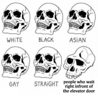 Comparison Meme: WHiTE  BLACK  ASİAN  people who wait  right infront of  the elevator door  GAY STRAIGHT