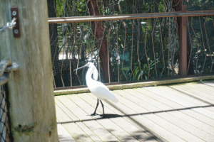 White feathers sparkling. What bird is this?: White feathers sparkling. What bird is this?
