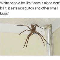 "Being Alone, Be Like, and Memes: White people be like ""leave it alone don'  kill it, it eats mosquitos and other small  bugs"" KILL IT Follow ➞ (@pablopiqasso) for more 🔥😤"