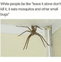 "Being Alone, Be Like, and Blackpeopletwitter: White people be like ""leave it alone don't  kill it, it eats mosquitos and other small  bugs""  I1 <p>Kill it, its got more legs than me (via /r/BlackPeopleTwitter)</p>"