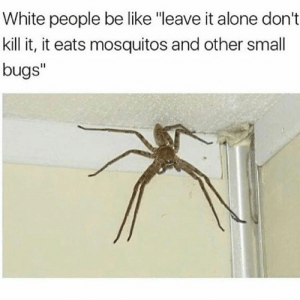 "Being Alone, Be Like, and White People: White people be like ""leave it alone don't  kill it, it eats mosquitos and other small  bugs""  I1 Kill it, its got more legs than me"