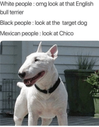 Omg, Target, and White People: White people : omg look at that English  bull terrier  Black people : look at the target dog  Mexican people : look at Chico He doesn't bite