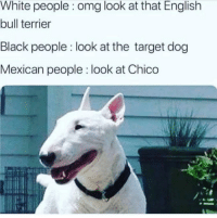 chico: White people: omg look at that English  bull terrier  Black people look at the target dog  Mexican people look at Chico