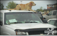 Trash, White, and White Trash: WHITE TRASH REPAIRS <p>They always say not to leave your dog in your car.</p>