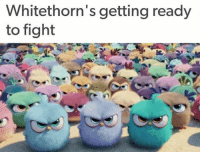 Getting Ready To Fight