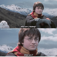 Memes, Who Am I, and Good: Who am I, Hedwig?  NEVILLESCARDIGAN  What am I? Hope you've all been having a good day! Which pet would you bring to Hogwarts?